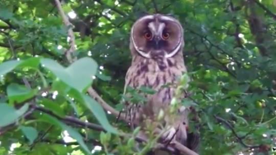 2015 Vroege Vogels - ransuil door George
